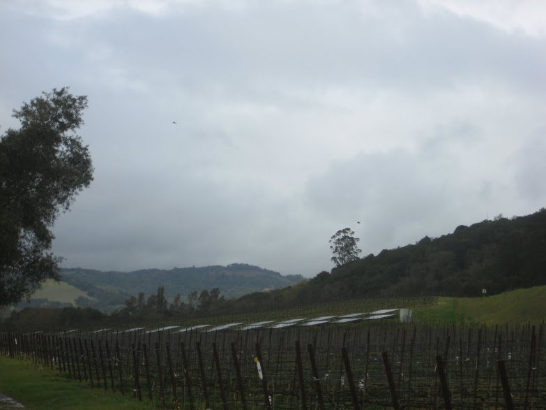California's Wine Country is Harvesting Grapes and Sunlight - Part 2: Great Location